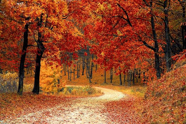 efterårsferie med aktivt lån