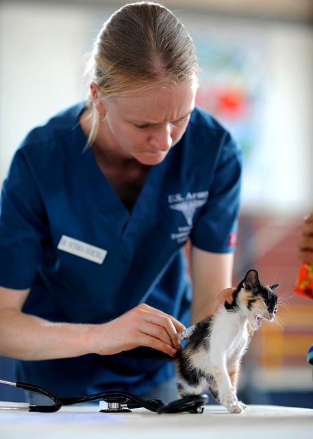 lån til dyrlæge på nettet